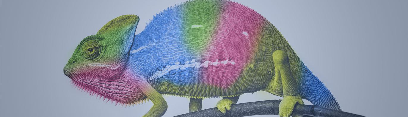 Headless Commerce chameleon