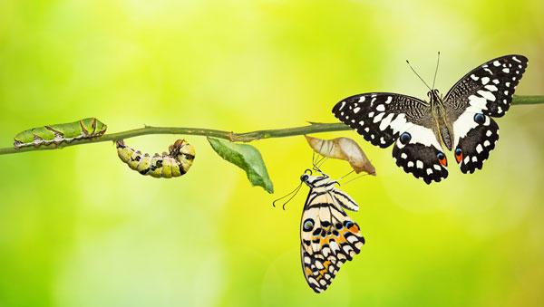B2B-Onlineshop Migration - Evolution Schmetterling